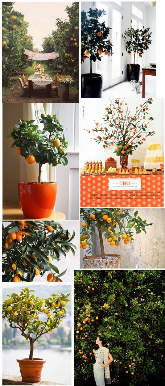 Citrus Tree Inspiration | PopBetty