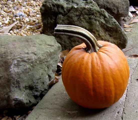 PopBetty - Halloween Pumpkin